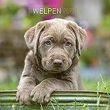 Welpen 2022 - Broschürenkalender 30x30 cm (30x60 geöffnet) - Kalender mit Platz für Notizen - Puppies - Hundekalender - Bildkalender - Wandkalender