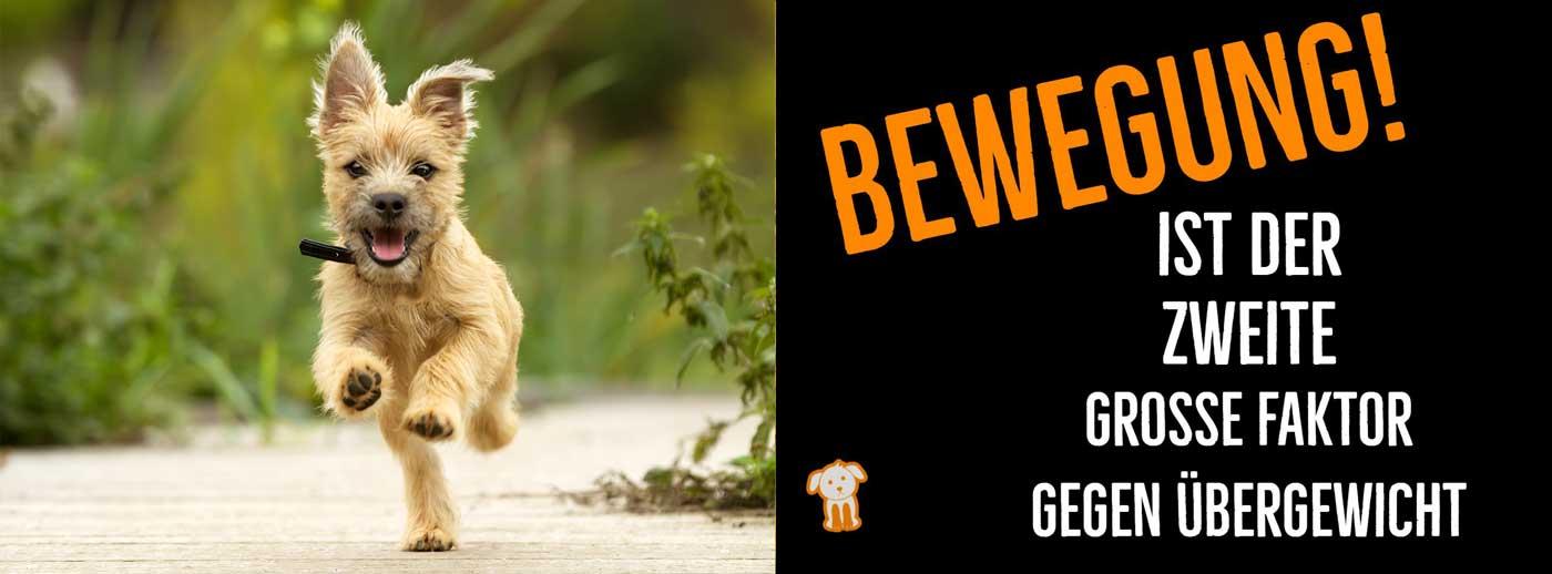 Links ein laufender Hund. Rechts Text mit dem Hinweis wie wichtig ausreichende Bewegung für eine erfolgreiche Hundediät ist.