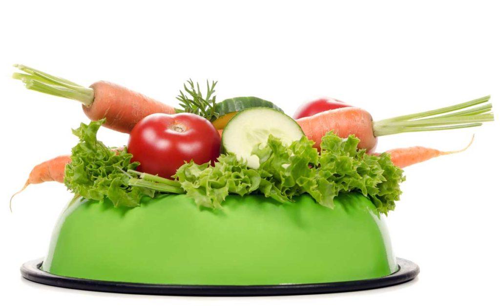 Dürfen Hunde Gurken essen? Ja, das ist nicht nur erlaubt, sondern auch sehr gesund. Gurken und anderes Gemüse im Hundenapf.