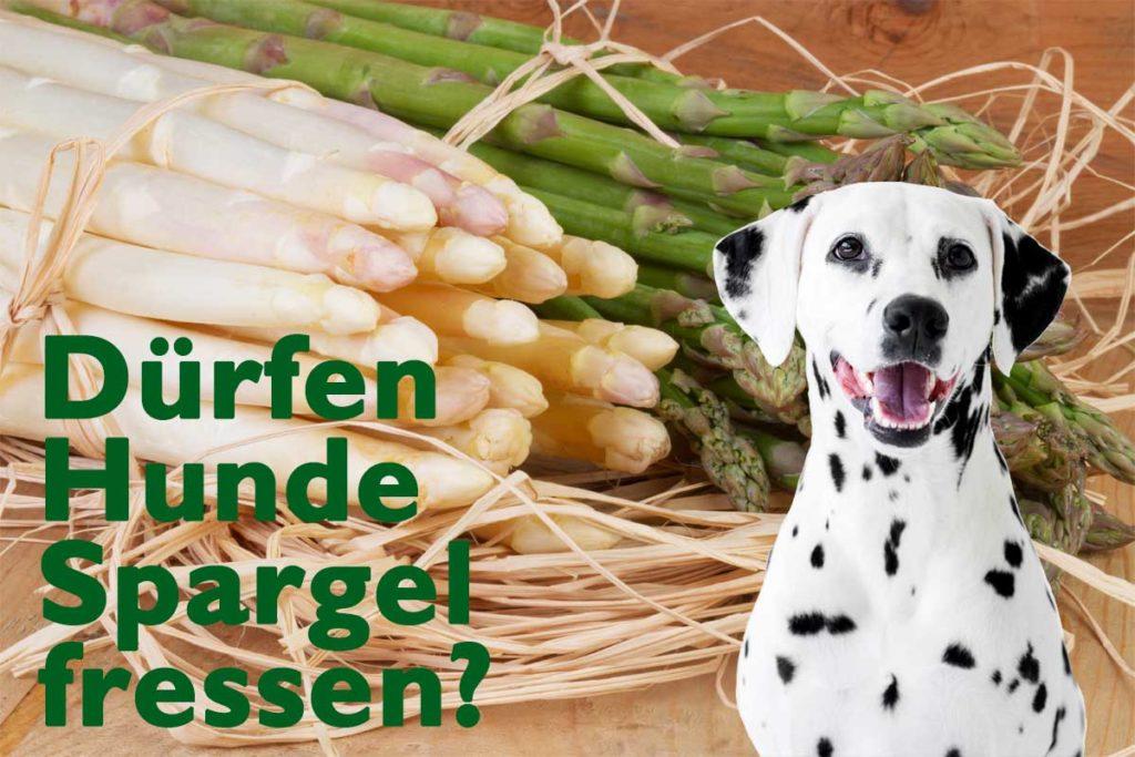 Weißer und grüner Spargel beschriftet mit: Dürfen Hunde Spargel essen? Zu sehen ist zudem ein Dalmatiner Hund.