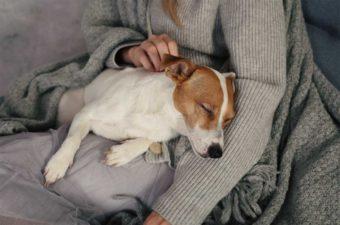 Entspannter Hund. Meditation in Frauchens Armen.