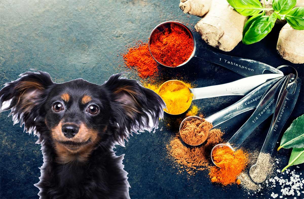 10 gesunde Gewürze für Hunde