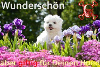 Hund inmitten blühender Frühlingspflanzen.