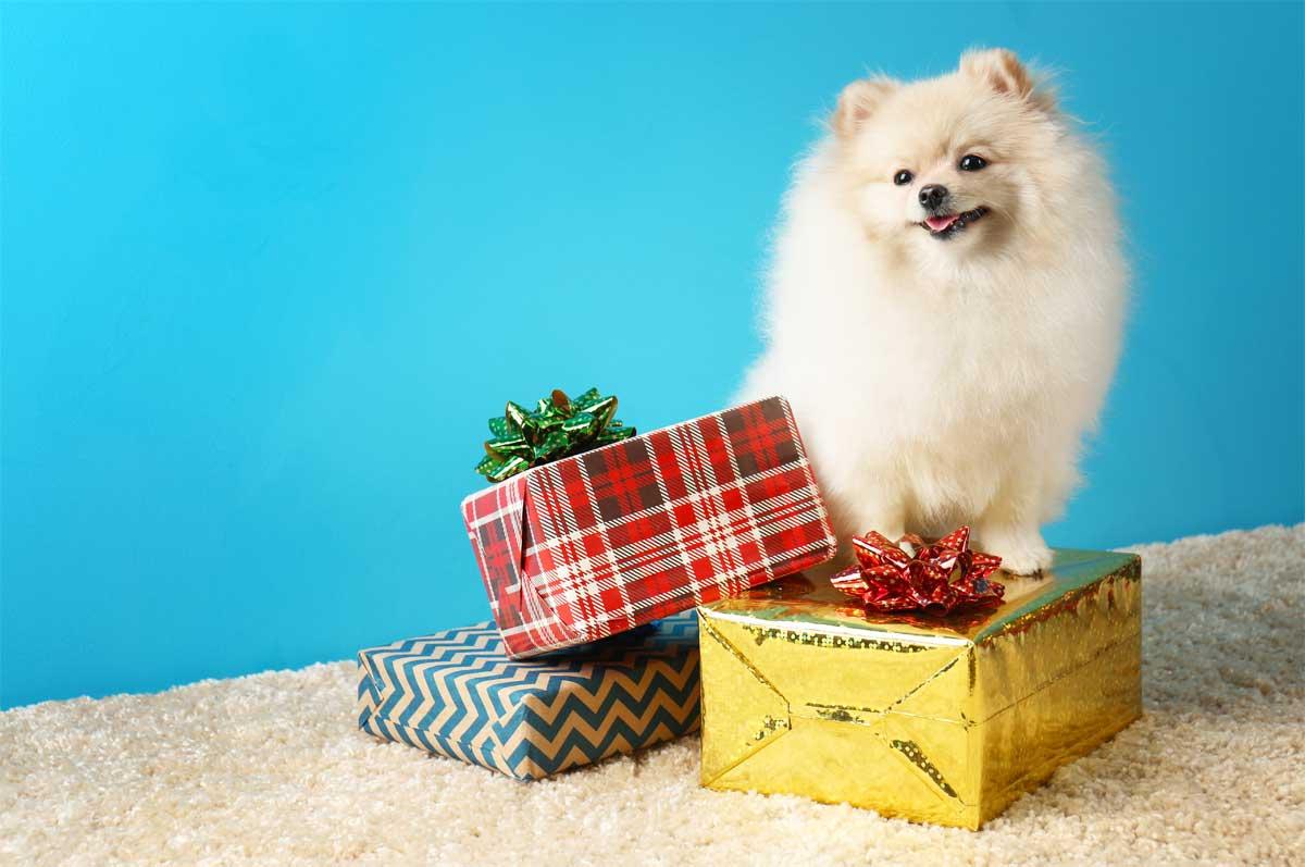 Geschenke für Hundebesitzer und ihre Hunde