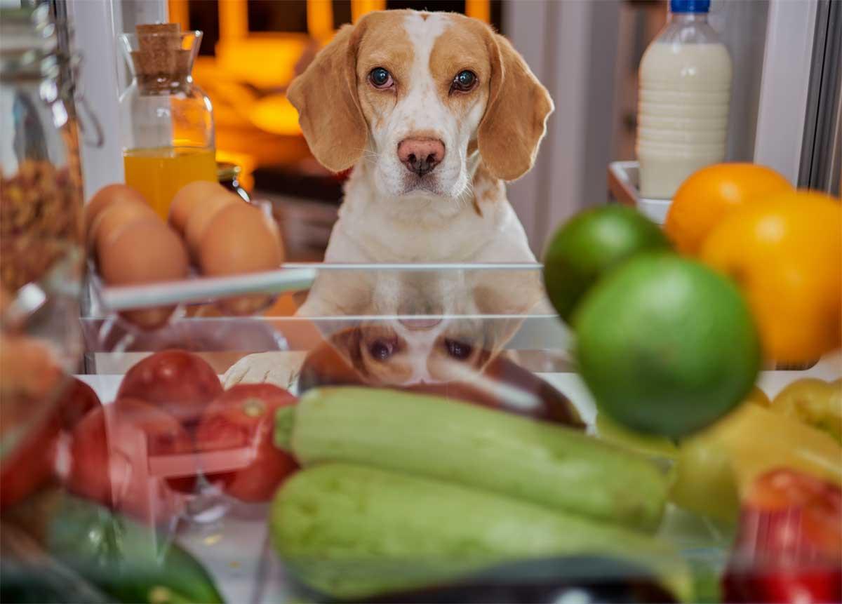 Hund schaut in den Kühlschrank.