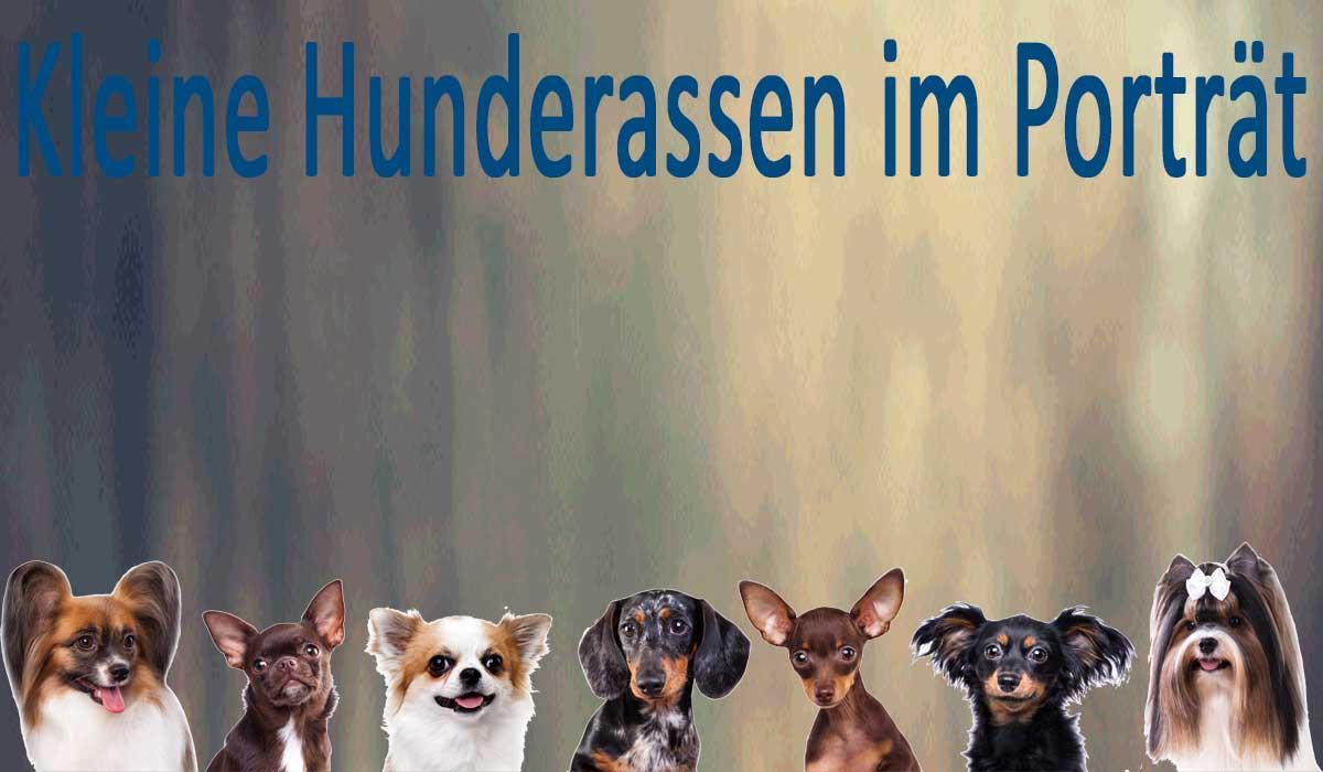 Bilder von verschiedenen kleinen Hunderassen.