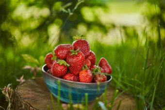Schälchen mit Erdbeeren auf einen Baumstumpf.