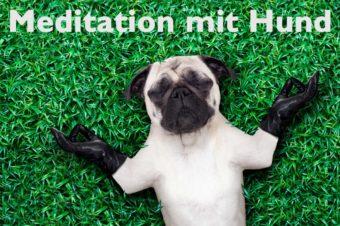 Meditation mit Hund. Hundeyoga.