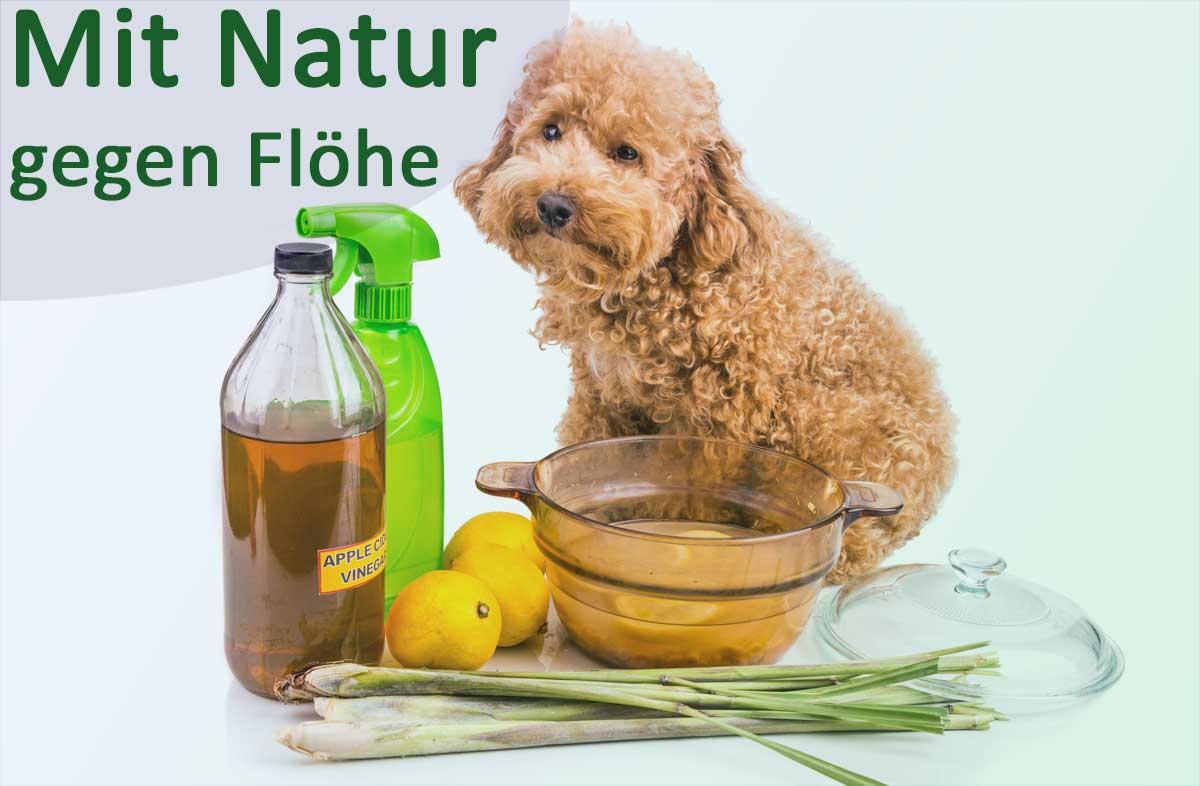 Hund mit verschiedenen natürliche Mittel gegen Flöhe.
