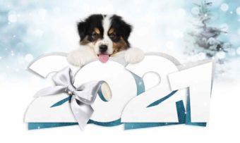 2021 und viele gute Vorsätze für Hund und Mensch.