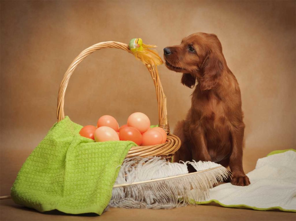 Hund neben einem Korb voll Ostereier.