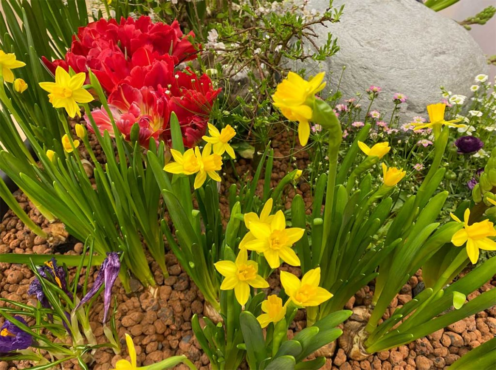 Oster Blumen und Osterdekoration. Vorsicht bei Welpen und kleinen Hunden.