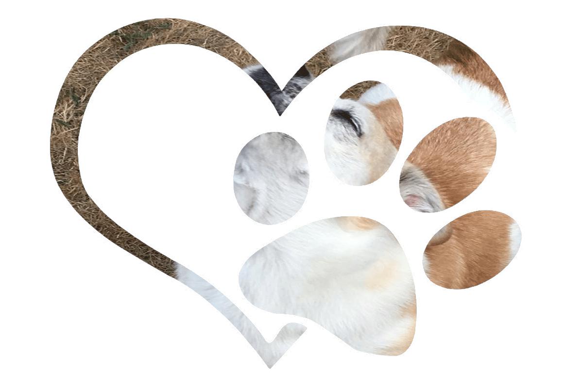 Herz mit Pfote - im Hintergrund Pumba. Hund. Erinnerung.