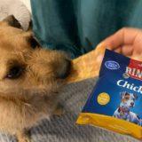 Hund möchte den Rinti Hundesnack. Fotocollage mit der Rinti-Tüte.