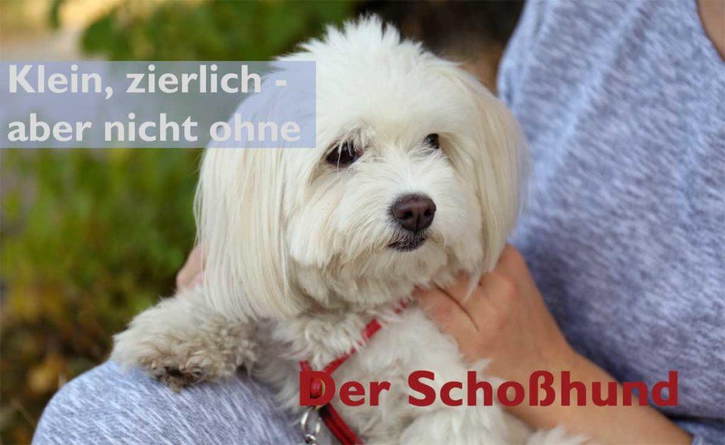 Schoßhund - klein, zierlich und sehr beliebt.