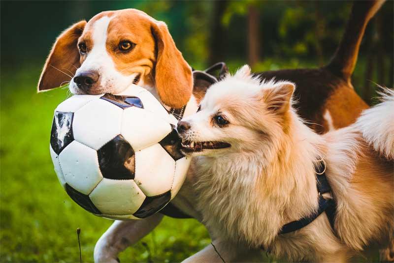 Zehn Hundespiele – Spielen mit dem Hund