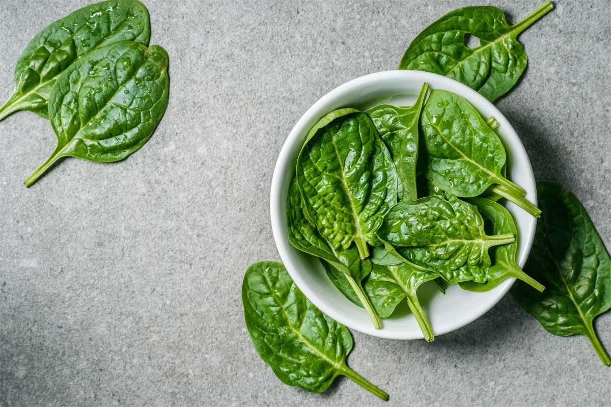 Rezept für Spinatkekse – Leckerei nicht nur für Popeye Hunde