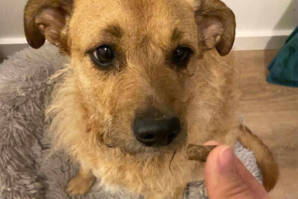 Mein Hund liebt die Carnello Alpenglück Strauß leckerlis in Federleicht. Sie dürften aus ihrer Sicht gerne noch etwas größer sein.