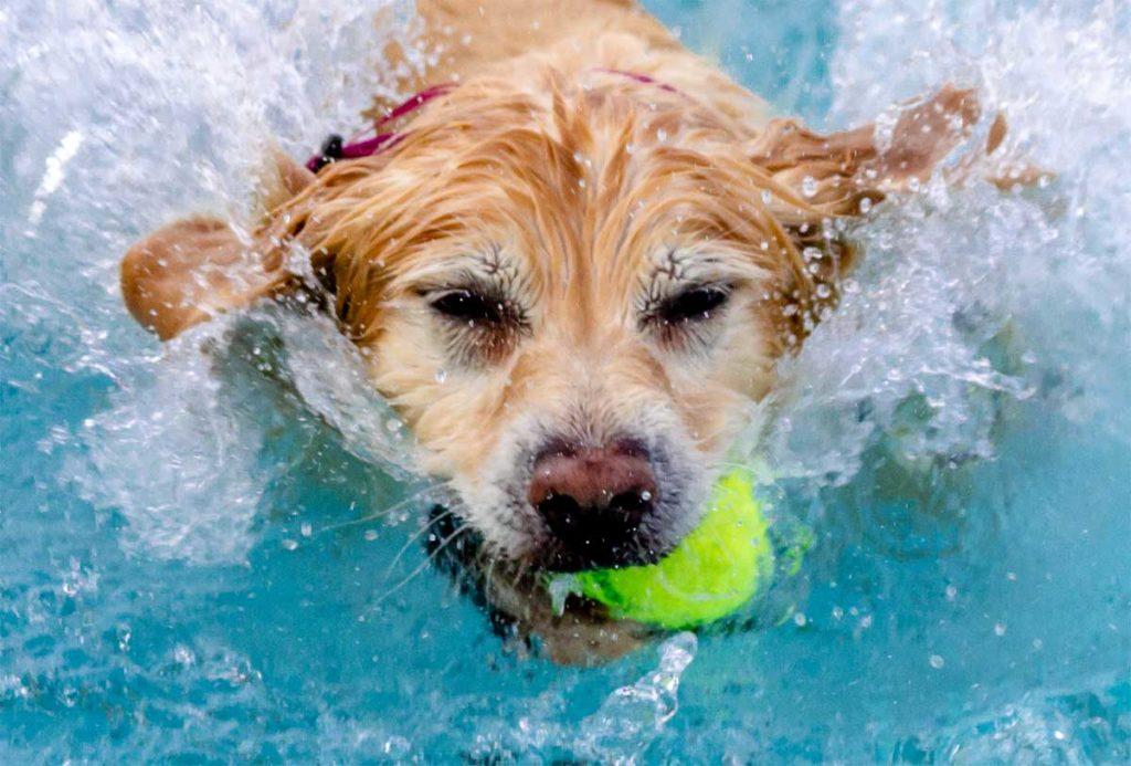 Tennisbälle schwimmen zwar gut, sind aber ungesund für die Hundezähne!.