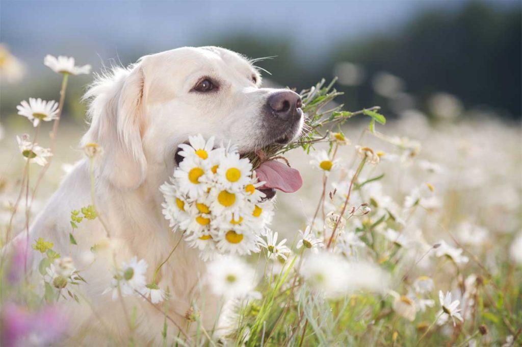Für Hunde ungiftige Pflanzen. Die Liste ist viel kürzer als die mit giftigen Pflanzen.
