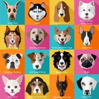 Verschiedene Hunderassen als Porträt.