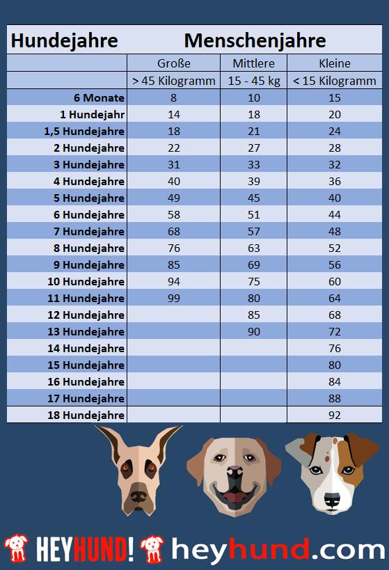 Tabelle mit einer Übersicht für kleine, große und ganz große Hunde zur Umrechnung von Hundejahren in Menschenjahren.