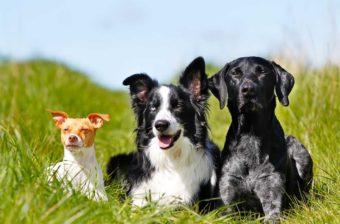 Lebenserwartung von Hunden.